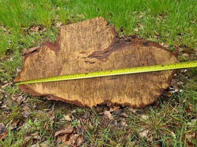 Oak Burrs