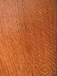 English Oak - Quercus Robur 2
