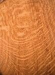 English Oak - Quercus Robur 6