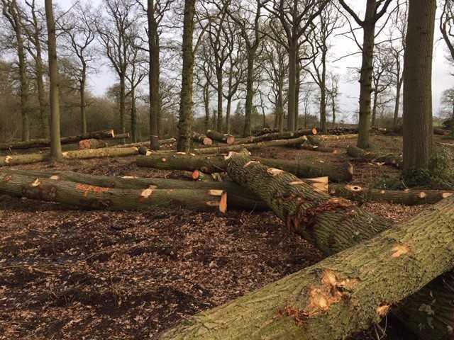 Header Image for: Grading Trees