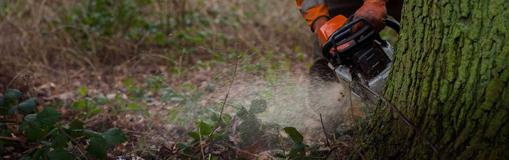 forest management header