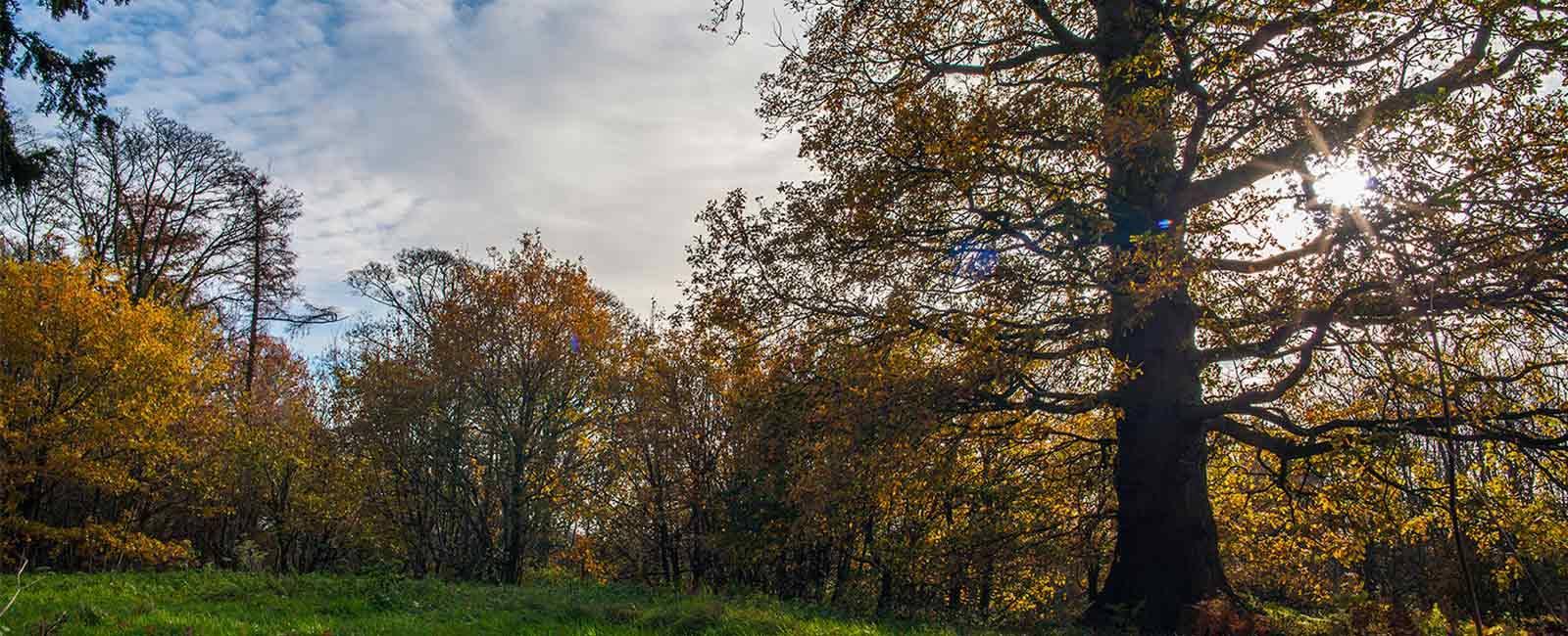 slider-woodlands-on-the-estates.jpg.webp